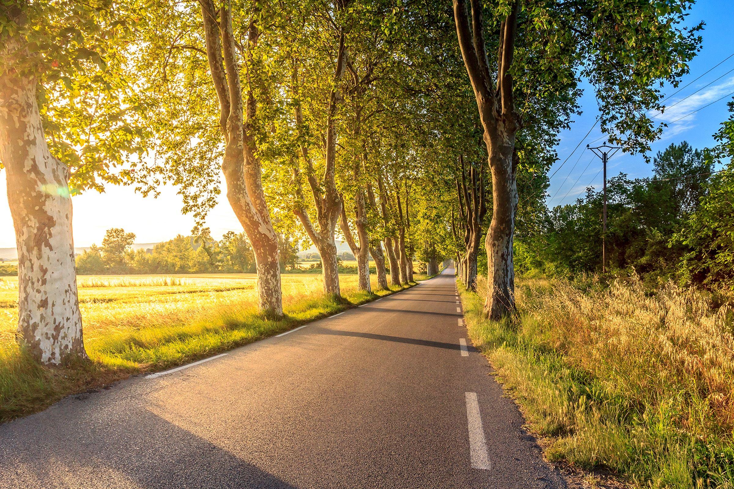 Bild von einer Strasse im Grünen, Sonnenschein